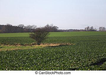 skallig, träd, på, fält