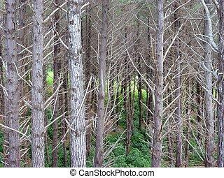 skallig, träd snablar