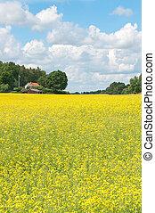 skandinavisch, sommerlandschaft, mit, gelber , wiese