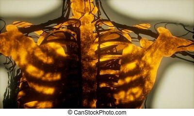 skandować, jarzący się, kość, ludzki szkielet