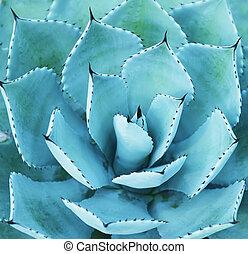 skarp, spetsig, agave, växt, bladen
