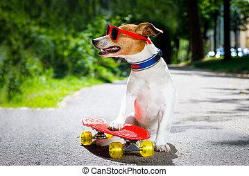 Skater Boy Dog Jack Russell Skater Dog With Red Cap Ready