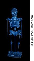 skelet, menselijk