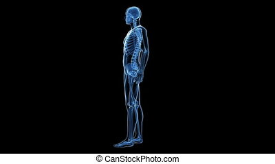 skeletachtig systeem, menselijk