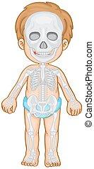 Skeletal system in human boy illustration