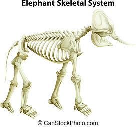 Illustration of the skeletal System of an Elephant on a white background