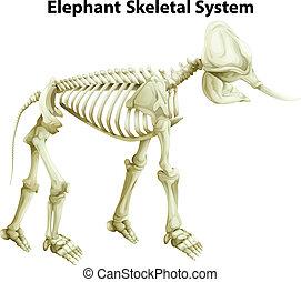 Skeletal System of an Elephant - Illustration of the...