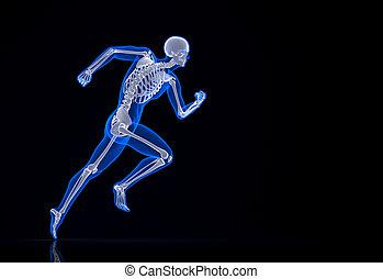 skeleton., τρέξιμο , ακινητοποιώ , path., απόκομμα