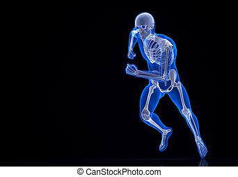 skeleton., 切り抜き, ∥含んでいる∥, 動くこと, 道, 3d