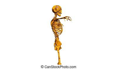 Skeleton - 3D CG rendering of a skeleton