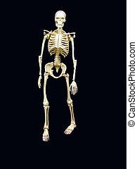 Skeleton - ,a skeleton over black,good education material or...