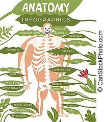 Skeleton Anatomy Infographics - Skeleton anatomy...