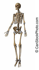 Skeleton anatomy map