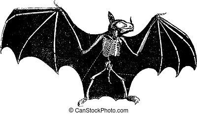 Skeleton Bat, vintage engraving.