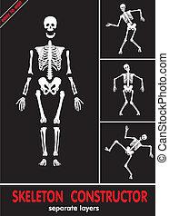 skeleton., bones, l, menneske, separat