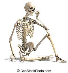 skeleton., correcto, recorte, encima, anatómico, interpretación, trayectoria, blanco masculino, sombra, 3d