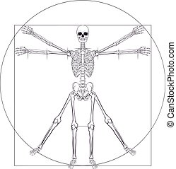 Skeleton Da Vinci Vitruvian Man