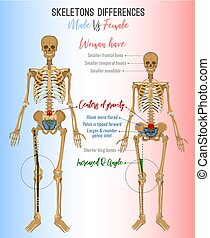 Skeleton differences image - Skeleton differences poster....