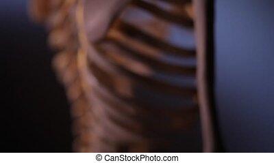 skeleton., dos, humain