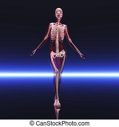 Skeleton - Digital visualization of a skeleton