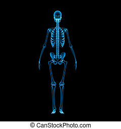 Skeleton full blue - The human skeleton is the internal...