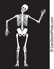 Skeleton - Funny vector skeleton isolated over black....