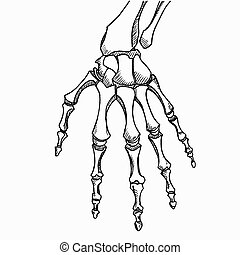 Skeleton hand vector. Sketch with hand bones isolated on...