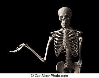 Skeleton - Human skeleton on black background