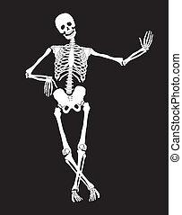 Skeleton - Funny vector skeleton isolated over black....
