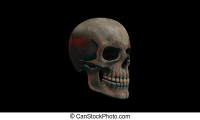 skeleton - image of scull