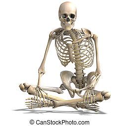 skeleton., korrekt, klippning, över, anatomisk, framförande,...