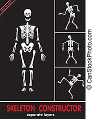 skeleton., l, ossos, human, separado