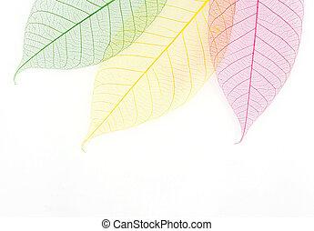 Skeleton leaf background