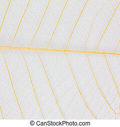 Skeleton leaf texture - Texture of skeleton leaf for...