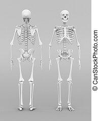 skeleton model