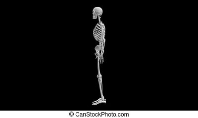 Skeleton model ratation