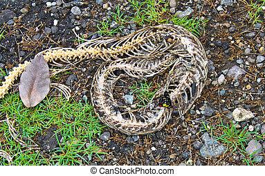 Skeleton of a snake