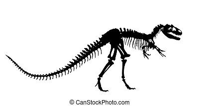 Skeleton of  dinosaur.