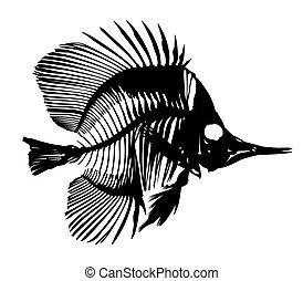 Skeleton of fish. - Skeleton of big predatory sea fish.