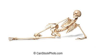Skeleton of human female lying on floor. On white...
