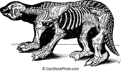 Skeleton of Megatherium, vintage engraving.