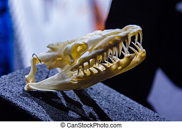 skeleton of the head of a snake
