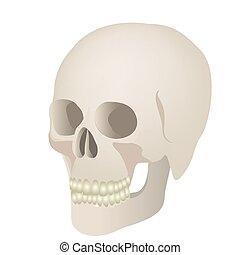 skeleton of the human skull icon
