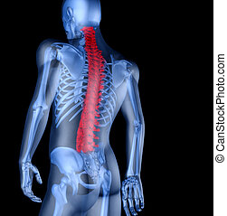 Skeleton of the man with the backache. 3D the image of a...