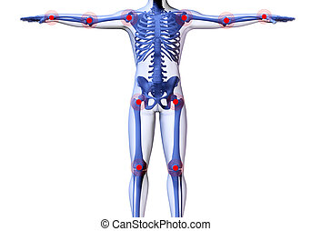 Skeleton of the man with the centres of pains of joints