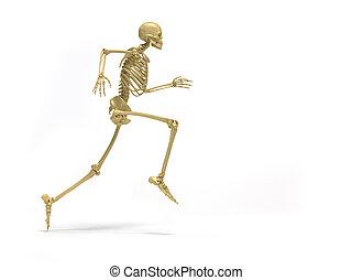 Skeleton running - Human skeleton running - 3d render...