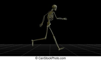 Skeleton running