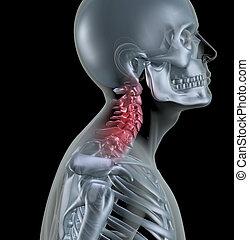 Skeleton showing neck bones - 3D render of a skeleton with...
