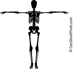 Skeleton - Silhouette of a skeleton