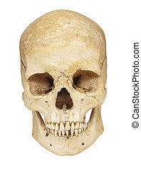 skeleton skull bones - close up of a skeleton on white...